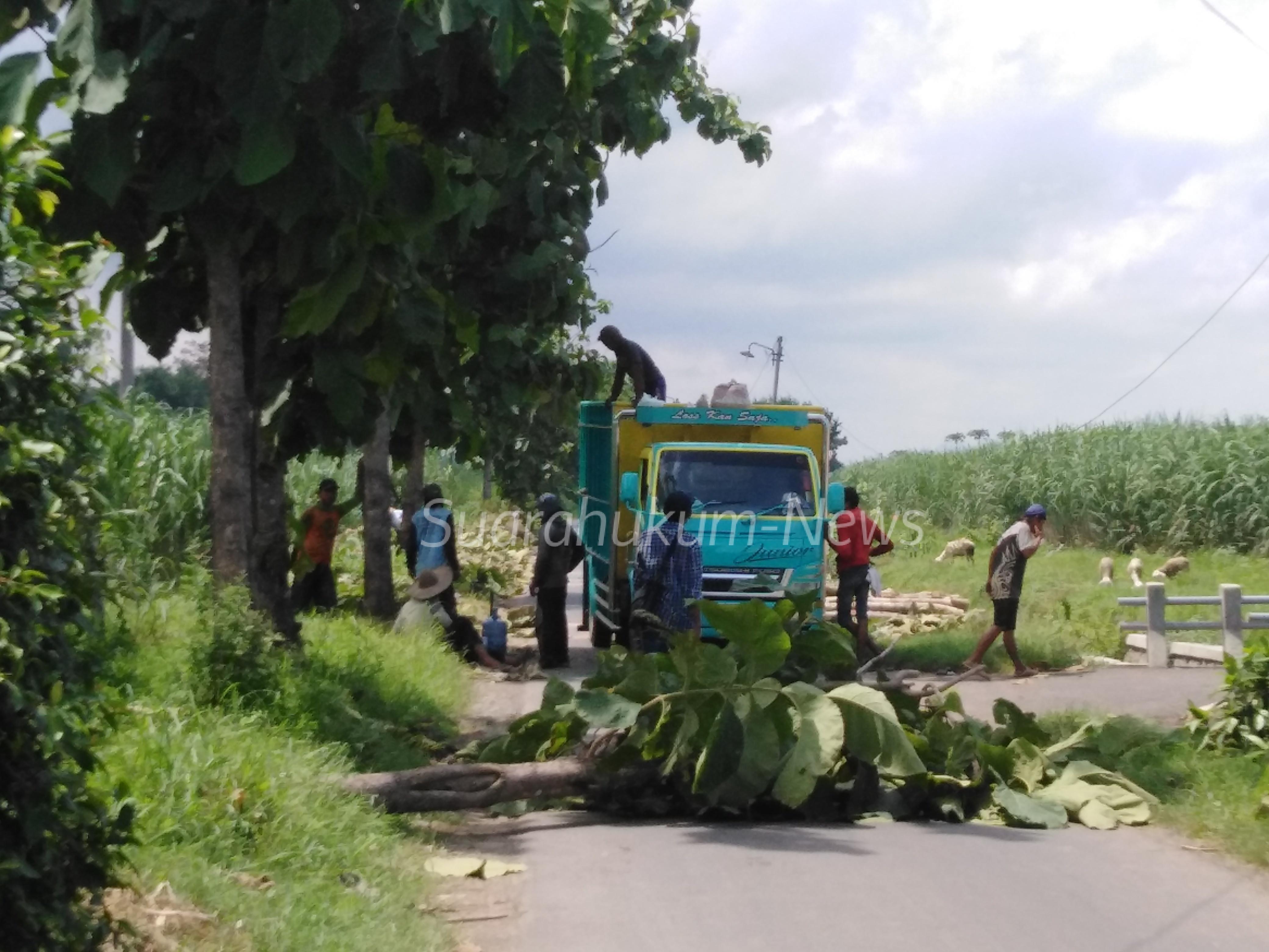 Tebang & Jual Pohon Di Jalan Kabupaten Tanpa Ijin , Sekda Suharyono: Harus Dikembalikan Pada Kas Negara