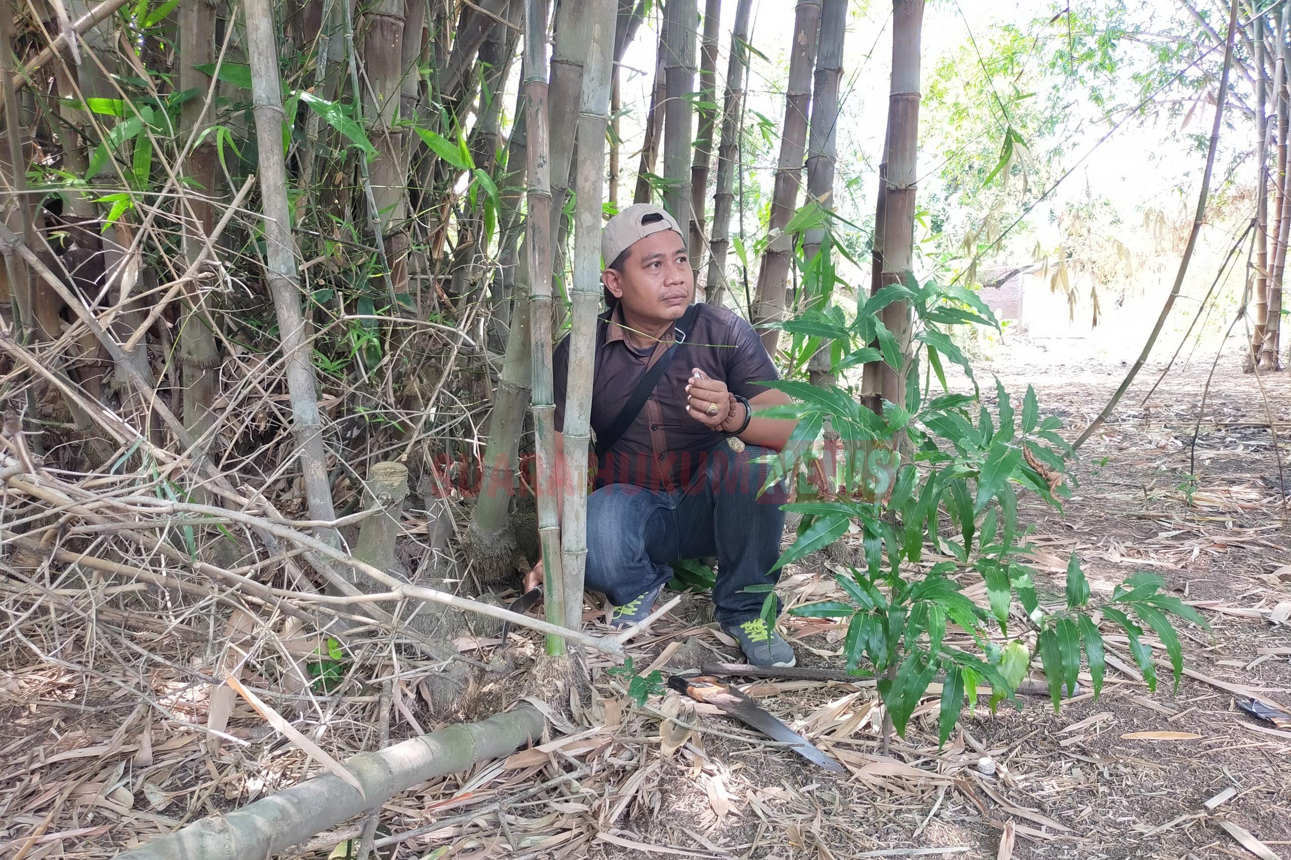 Mengenal Ciri Bambu Bertuah Dan Berkodam