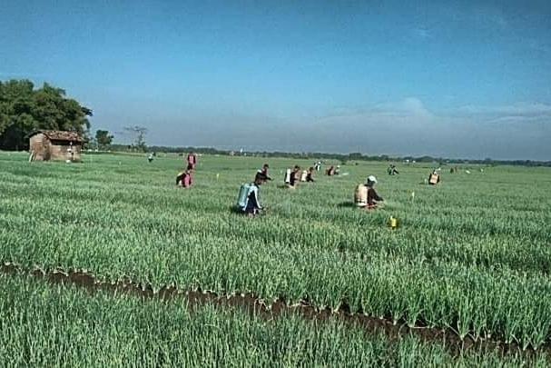 Rektor IPB : Hanya Sektor Pertanian Yang Tahan Goncangan