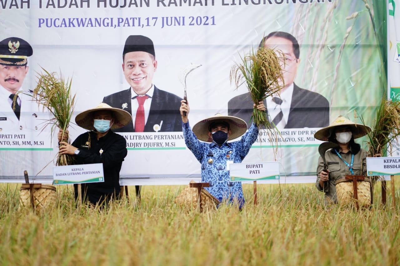 Bupati Haryanto bersama Balingtan Panen Demfarm Padi Sawah Tadah Hujan, Yang Ramah Lingkungan
